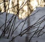 Free Photo - Some snowy plants