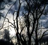 Free Photo - Dark tree
