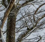 Free Photo - Snowy trees