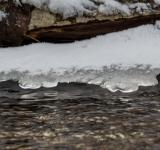 Free Photo - Spring and ice