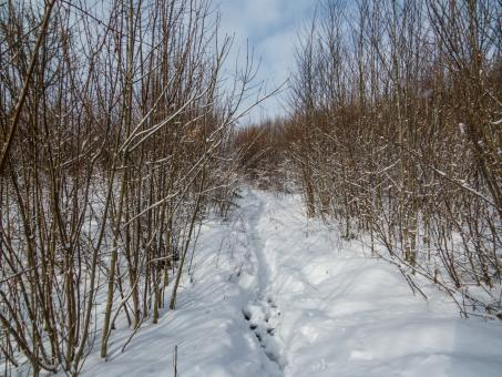 Path in snow - Free Stock Photo