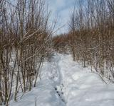 Free Photo - Path in snow