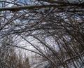 Free Photo - Branches alley