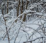 Free Photo - Snow branches