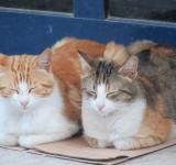Free Photo - Two cats sleeping