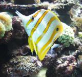 Free Photo - Tropical fish
