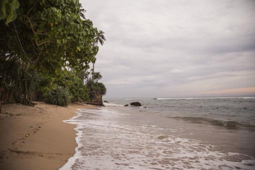Jungle beach Sri Lanka - Free Stock Photo