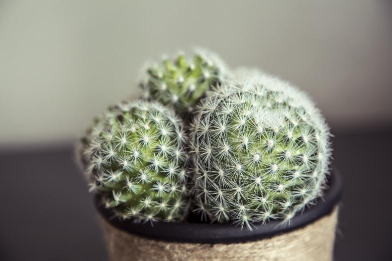 Free Stock Photo of Cactus in a handmade pot Created by Mili Vigerova