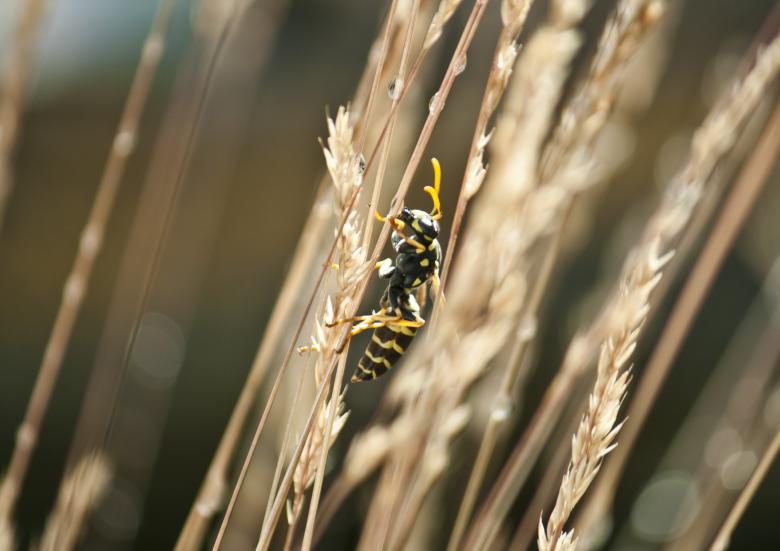 Free Stock Photo of Wasp in the garden Created by Mili Vigerova