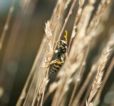 Free Photo - Wasp in the garden