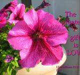Free Photo - The Greatest Gift Is Love