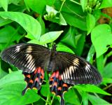 Free Photo - Big Butterfly