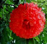 Free Photo - Big Red Flower
