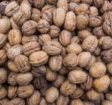 Free Photo - Walnuts background texture