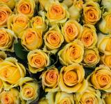 Free Photo - Yellow roses