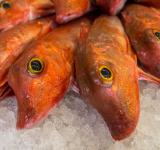Free Photo - Fresh fishes in a market