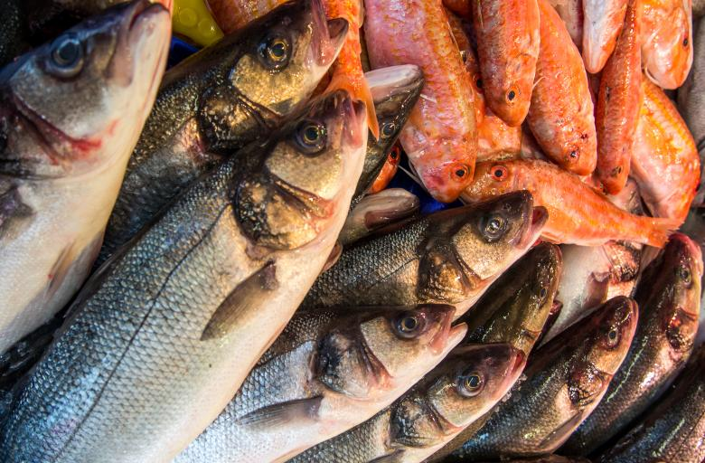 Free Stock Photo of Fresh fish in a market Created by Merelize