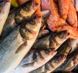 Free Photo - Fresh fish in a market