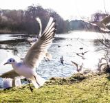 Free Photo - Seagulls flying