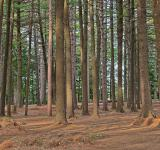 Free Photo - Dorwin Forest - HDR