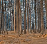 Free Photo - Dorwin Forest - Winter Blue HDR