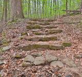 Free Photo - Woodend Sanctuary Steps - HDR