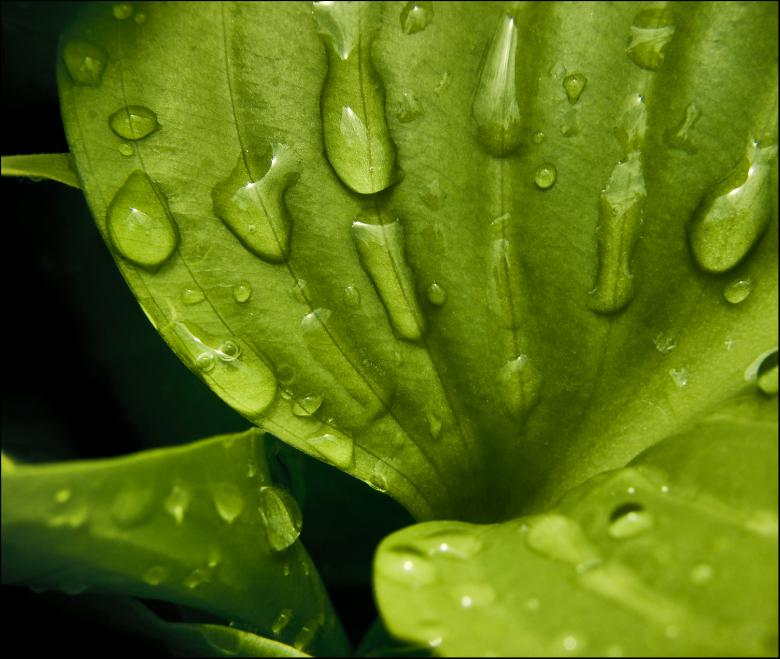 Free Stock Photo of Water drops on leaf Created by Mili Vigerova