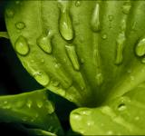 Free Photo - Water drops on leaf