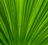 Free Photo - Palm leaf texture