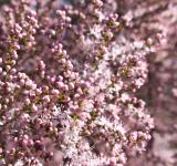 Free Photo - Tiny pink flowers