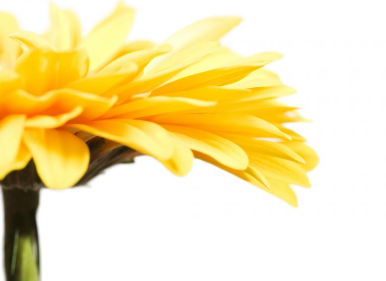 Free Stock Photo of Yellow Gerbera Created by 2happy
