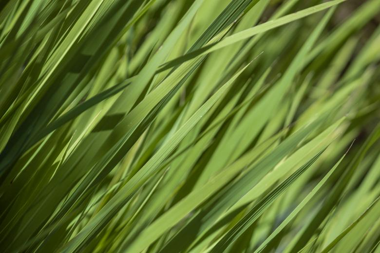 Free Stock Photo of Grass texture Created by Mili Vigerova