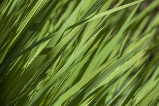 Grass texture - Free Stock Photo