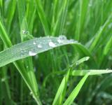 Free Photo - Rain drops on grass