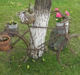 Free Photo - Old rusty bike with flower pots