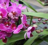 Free Photo - Orchid