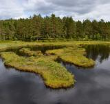 Free Photo - Boggy lake shore