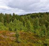 Free Photo - Forest in Norway