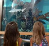 Free Photo - Kids near aquarium