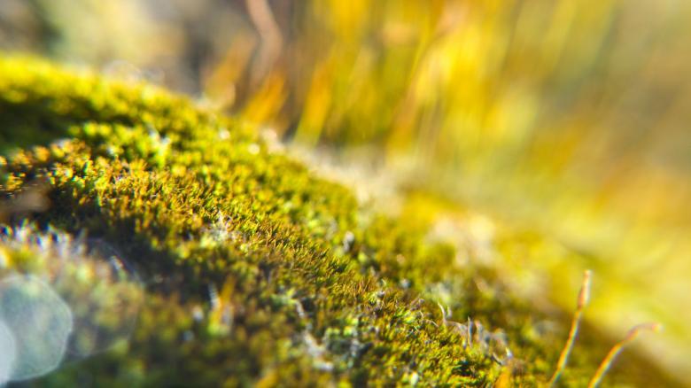 Moss - Free Organic Backgrounds