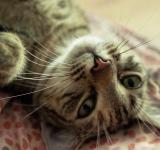 Free Photo - playful cat