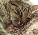 Free Photo - Seeping cat