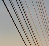 Free Photo - wires