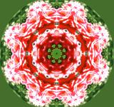 Free Photo - kaleidoscope flower mandala