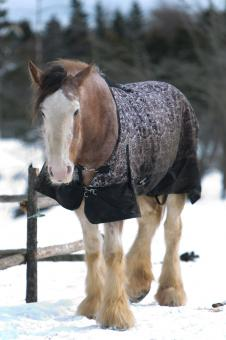 Horse in the snow - Free Stock Photo
