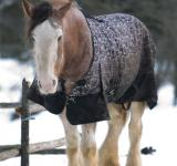 Free Photo - Horse in the snow