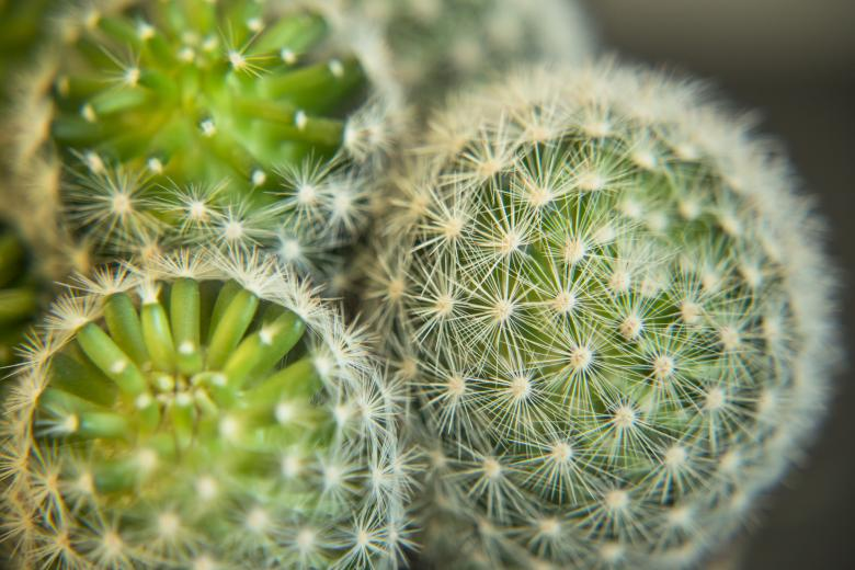 Free Stock Photo of Home Cactus Created by Mili Vigerova