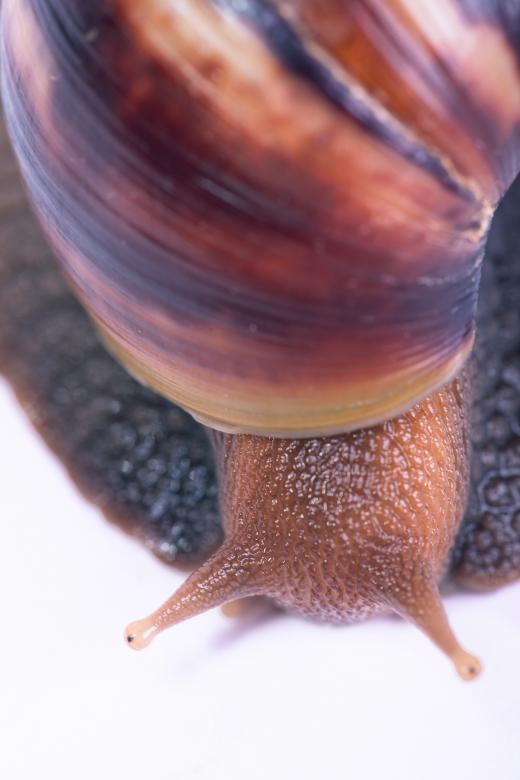 Free stock image of Snail created by 2happy