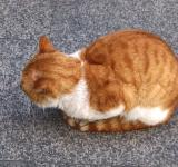 Free Photo - Coiled Cat on Street
