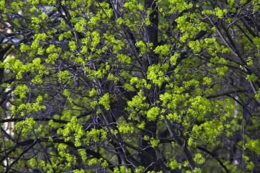 green spring leaves - Free Stock Photo